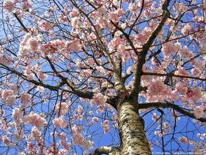 arbre au printemps