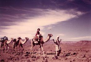 haut perchée sur le chameau