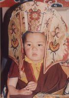 réincarnation de Thuksay Rimpoche