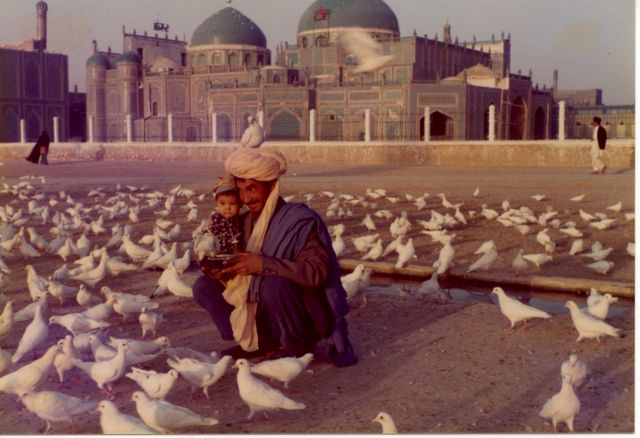 mosquée de Mazar I Sharif et les pigeons