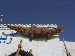 crocodile empaillé
