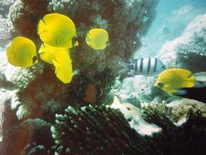 les poissons multicolores