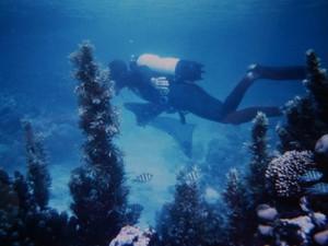 en plongée