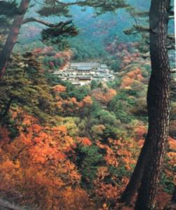 paysage de montagne et de forêts