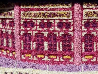 détail des fleurs de jacinthes
