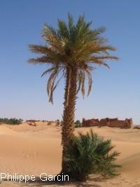 palmier02.jpg