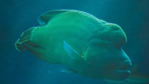 aquariumnoumea3110907100.jpg