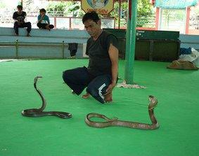 Au royaume du Siam (6/8) ferme aux serpents, maison de Jim Thomson dans THAILANDE 1-12