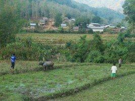 Splendeurs du Laos (21/36) une journée à l'écolodge  dans LAOS 533