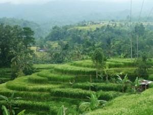 A Java et Bali (35/41) montagne des poèmes et rizières dans INDONESIE 10-34-300x225