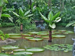 2-26-300x225 dans MALAISIE