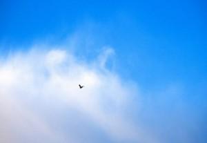 oiseau-300x207